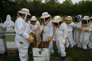 szolgáltatásaink, felnőtt mézes bemutatók, méhészkedés, méhészeti bemutatók, bejárás a méhészetbe, szolgáltatások