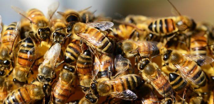 A méhészkedés története, avagy az ősrégi méz
