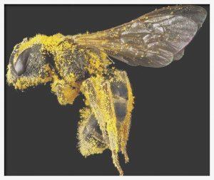 állatbarát, méh, méhecske, Holló Méhészet, propolisz