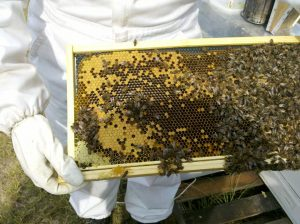 felnőtt méhészeti bemutató
